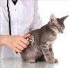 Ветеринарные клиники в Новодвинске